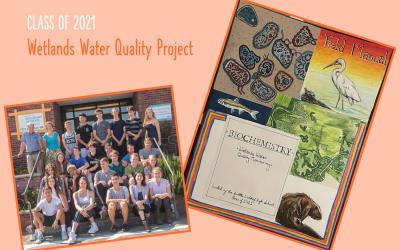 Wetlands Water Quality Project