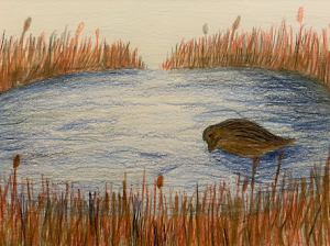 Wetlands drawing by Lucy Doggett